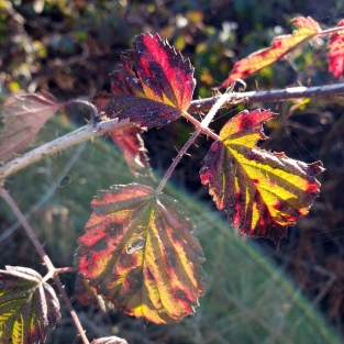 Coast Trail Foliage 1