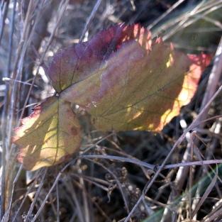 Coast Trail Foliage 2