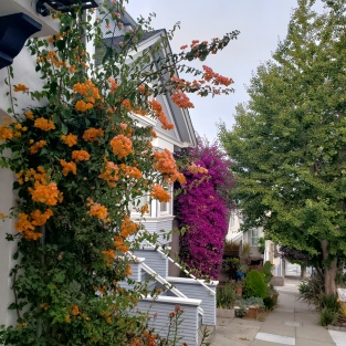 Colors of Bougainvillea & Dolores Hts Houses