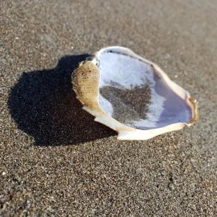 Muir Beach Crabshell 3