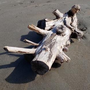 Muir Beach Driftwood