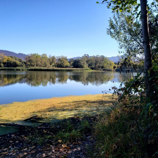 Paddleboarder on Spring Lake