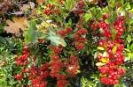 Seasonal Berries & Oak Leaves1