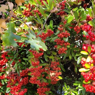 Seasonal Berries & Oak Leaves 1