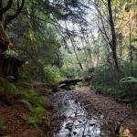 Streambed & Fallen Trees2