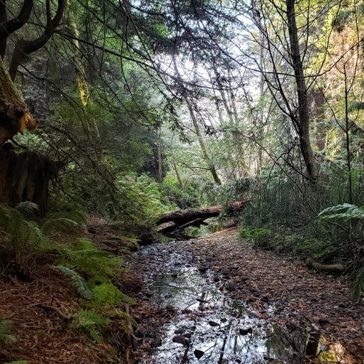 Streambed & Fallen Trees 2