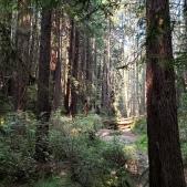 Streambed & Fallen Trees