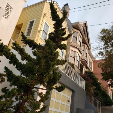 Tree & Houses