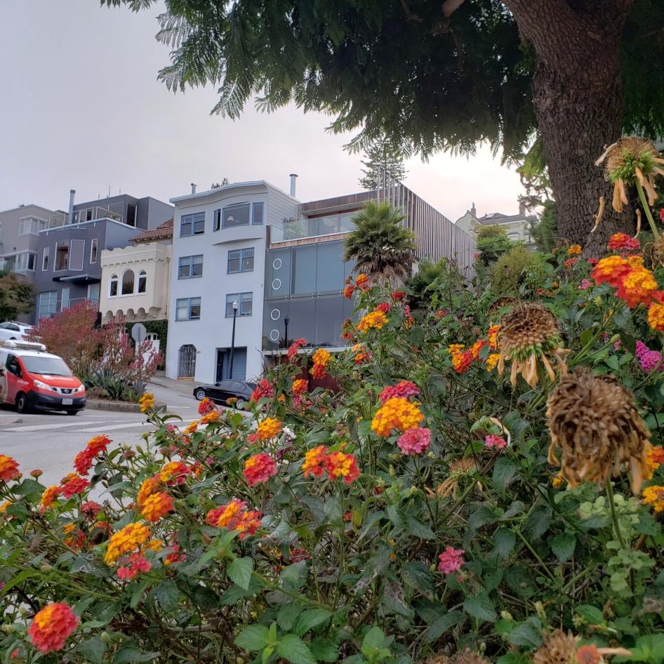 Urban Garden & Dolores Hts Houses