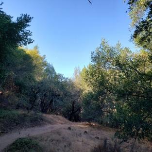 20201108 Annadel Side Trail 1