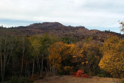 20201121 Sugarloaf - Bald Mtn & Autumn Color