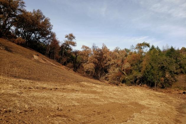 20201121 Sugarloaf - Burn-Line Hillside