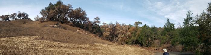 20201121 Sugarloaf - Burned Hillside Pano