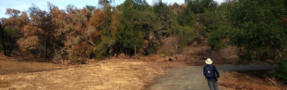20201121 Sugarloaf - Burned Hlilside Pano w Trail