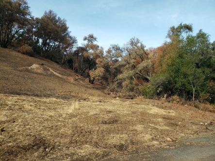 20201121 Sugarloaf - Trees at Burn Line