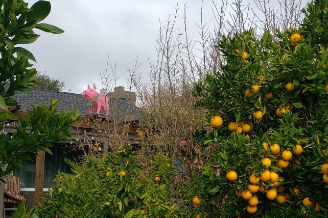 Flying Pig & Orange Tree