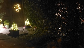 Lit Wreaths & Trees