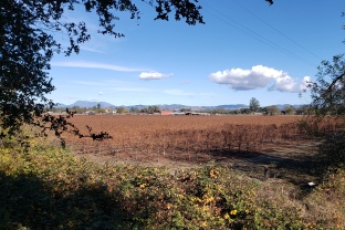 Mt St Helena & Autumn Vineyard
