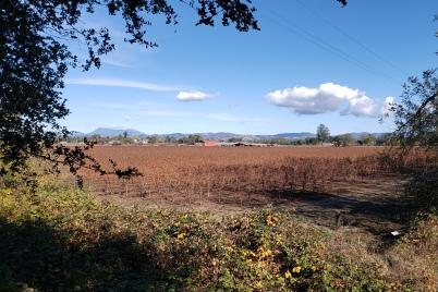 Mt St Helena & Autumn Vineyard