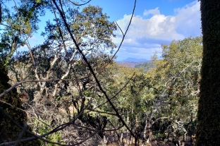 Mt St Helena from Annadel