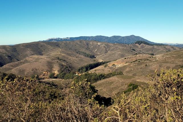 Mt Tam from Wolf Ridge