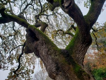 Old Oak Doyle Park 1