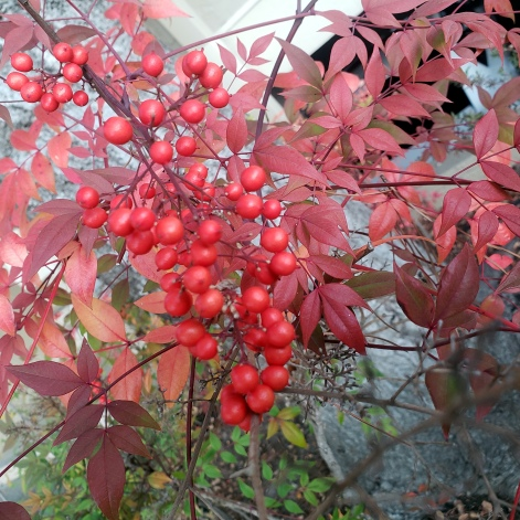 Red Berries & Leaves 1