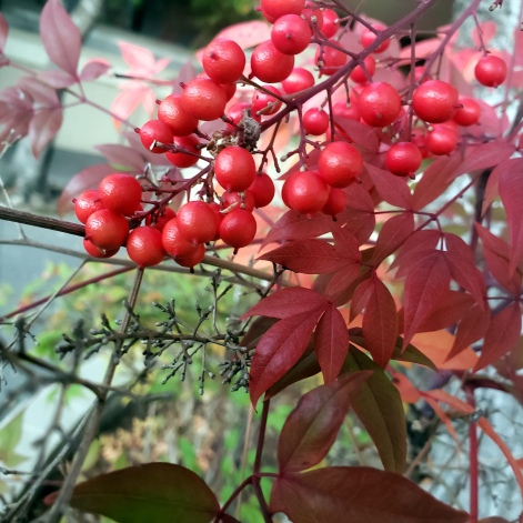 Red Berries & Leaves 2