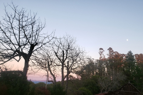 Southeast SoCo Hill Country w Moonrise & Sunset
