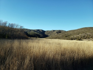 Tennesse Valley Winter Grasslands