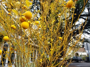 Yellow Fruits & Branches