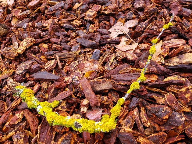 Yellow-Lichened Branch on Woodchips