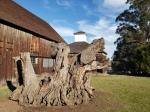 Olompali Barns & TreeStump