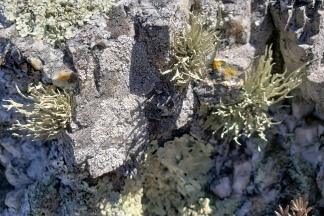 TN Valley Lichen 2