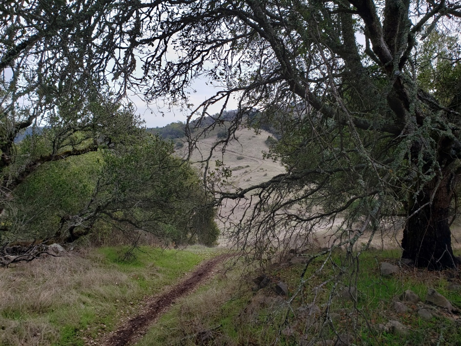 Annadel Side Trail