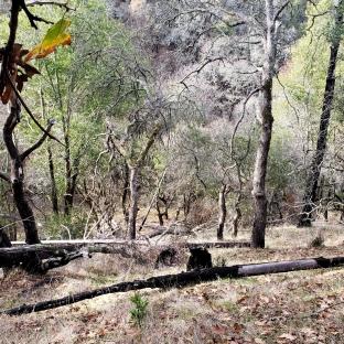 Partly-Burned Hillside
